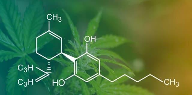 CBD tinh luyện được chiết suất từ thực vật thuộc họ Cannabis