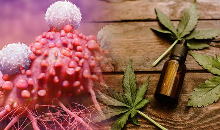 Các Cannabinoid chứng tỏ khả năng tăng cường tác dụng tiêu diệt khối u trong hóa trị liệu