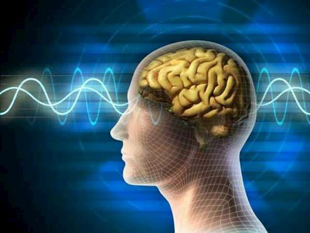 Hạt giúp bảo vệ não bộ