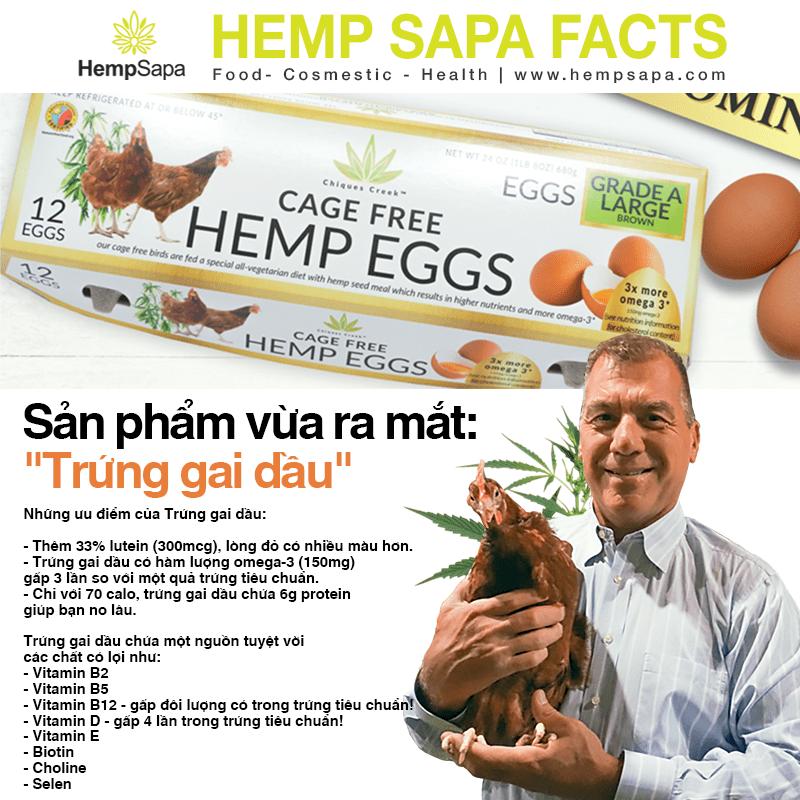 Trứng gai dầu - Hemp Eggs : xu hướng sử dụng thực phẩm của người tiêu dùng thông minh