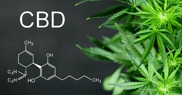 Tương tác thuốc mới của Cannabinoid đối với CES1